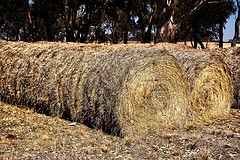 Looking for a sales representative is like looking for a needle in a haystack